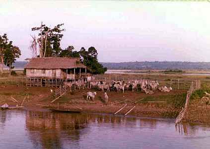 Ranch on the abnks of the Amazon River