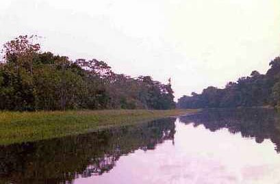 By canoe into the Amazon rain forest