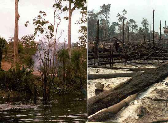Amazon rain forest burned to the ground for small farming