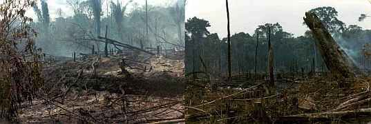 Amazon rain forest destruction in 1981