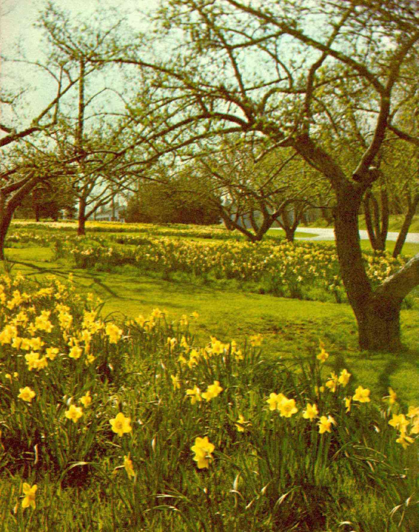 Spring comes to the Reader's Digest headquarters, 1977