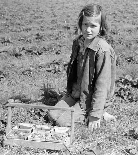 Child of migrant berry worker picking strawberries in field near Ponchatoula, Louisiana  Photo: Russell Lee