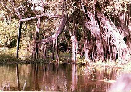 Amazon Forest Interior near Manaus Brazil Uys