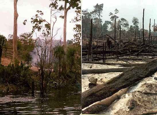 Amazon Forest Burning Brazil Uys