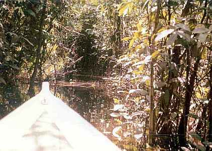 Amazon Forest Interior