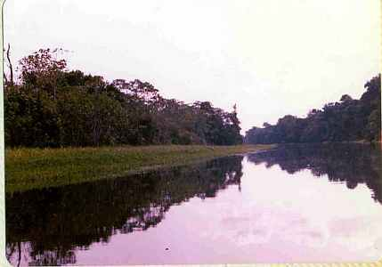 Amazon River Bank Brazil Uys